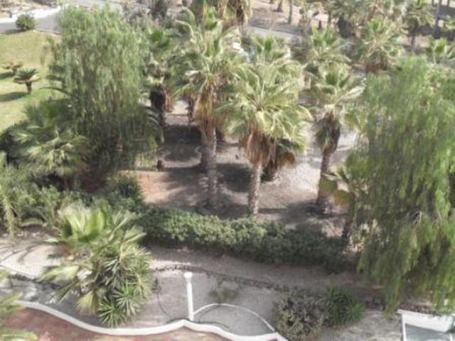Tropical Park gardens - Tropical Park, Callao Salvaje, Tenerife